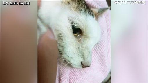 貓咪離世前含淚躺在主人懷中。(圖/網友Molia Lin授權)