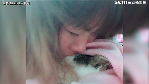 面對相伴二十二年的愛貓離世,主人相當不捨。(圖/網友Molia Lin授權)