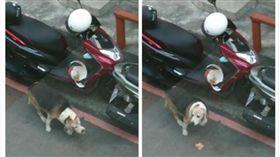 車主暫放車上的炸雞,被路過的狗狗吃掉。(圖/翻攝自臉書)