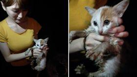 人美心更美!她為救貓鑽臭水溝還被咬 被領養後笑:很值得(圖/翻攝自臉書愛貓聯盟)浪貓,救援,正妹