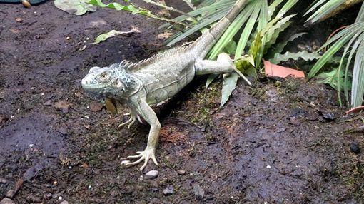 外來種,台北市立動物園,生態, 寵物