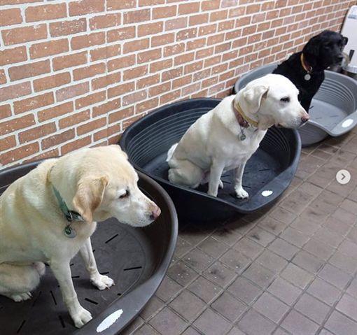 總統蔡英文1日為收養的退役導盲犬Bella和Bunny慶生。(圖/翻攝自IG)