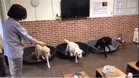總統蔡英文1日為收養的退役導盲犬Bella和Bunny慶生。(圖/擷圖自臉書影片)