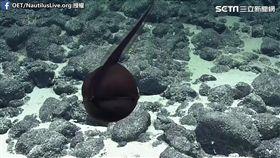 研究員在深海發現吞鰻。(圖/OET/NautilusLive.org.授權)