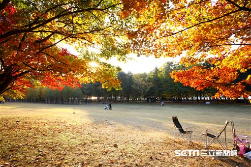 韓國楓葉,楓葉,賞楓。(圖/韓國觀光公社提供)