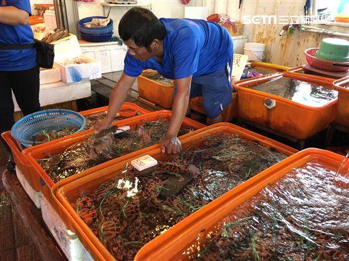 野柳,萬里蟹,螃蟹,海鮮一條街,龜吼漁港