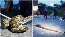 泰國,蟒蛇,狗狗,儲藏櫃(圖/翻攝自sanook)