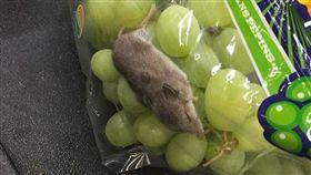睡得好香!超市「買葡萄送老鼠」 網友:捨不得吵醒牠(圖/翻攝自MAX PAYNE推特)