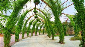 台中花博植栽2500種 逾6成來自中台灣  /中市府提供