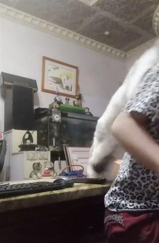 毛小孩,貓,唱歌,發火,/翻攝自爆怨公社