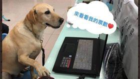 台東縣消防局,健康,搜救犬,宣傳照,選手,第一