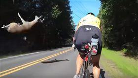 汽車高速撞上小鹿 騎士錄下驚險瞬間 (圖/翻攝自YouTube)