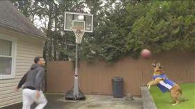 狗狗傳出「空中接力」 助攻主人灌籃 空中接力,汪星人,哈林蘭球,灌籃大賽,Max Pearce 翻攝自推特