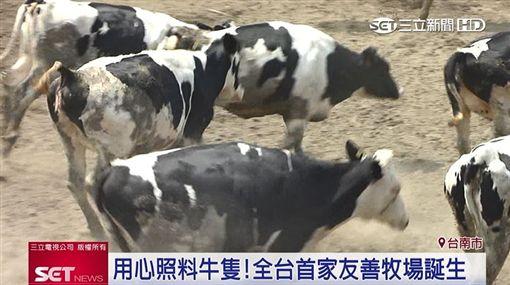 細心呵護乳牛!牧場友善人道認證 鮮奶安心加倍(業配)