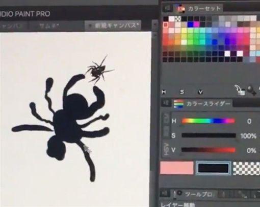 蜘蛛,繪圖,Twitter 圖/翻攝自といふぇるTwitter