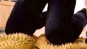罰跪,跪榴槤,跪,分手,懷孕,流產,分手,協議,起訴,提告,大陸,浙江,中國 圖/翻攝自微博