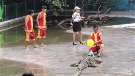 大師表演鱷魚秀。(圖/翻攝自世界奇聞YouTube)
