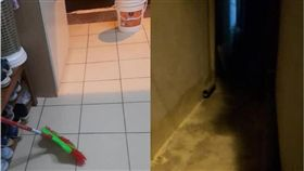 愛貓鄰居「餵後不理」 辯:貓咪的尿尿不會臭! 圖/翻攝自爆怨公社