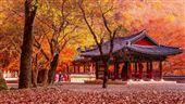 最美秋季風景!來韓國淋場暖色系的雨