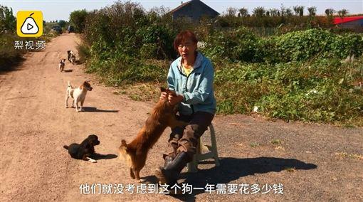 大陸山東青島市一名55歲劉姓大媽,從2002年就開始收養流浪狗,至今已養了360多隻。她為了負荷每個月花在流浪狗身上1萬6000元人民幣(約新台幣約7.1萬)開銷,每天只吃一餐,甚至還賣車養狗!不少網友看到後掀起熱議,紛紛直喊「超有愛心!」(圖/翻攝自梨視頻)
