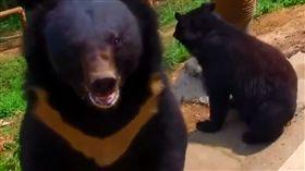 黑熊 示意圖 (翻攝自黎視頻)