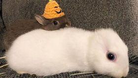 無耳也可愛!飼主化身造型師 「百變兔」多樣造型萌翻網友。(圖/翻攝自kemonomimi_bunny IG)