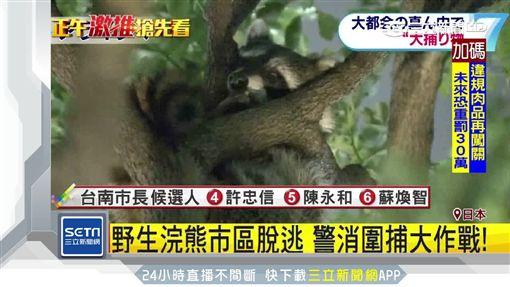 東京 浣熊 樹上
