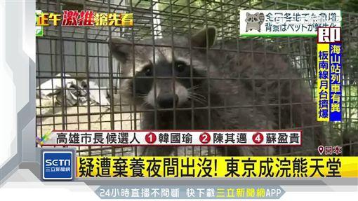東京 浣熊 籠子