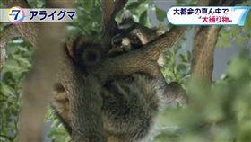 東京 浣熊 乾淨