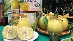 台南大白柚產季到台南大白柚進入產季,今年產量預估約有5690公噸,和去年相當,歡迎民眾訂購品嚐在地當季好滋味。(台南市農業局提供)中央社記者張榮祥台南傳真 107年10月19日