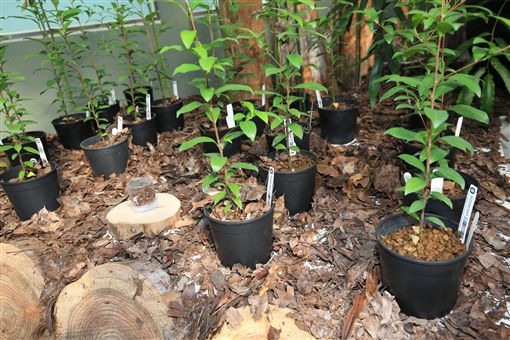 花博外埔園區智農館,展出逾千種珍稀植物(台中市政府提供)
