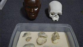 萬年人類化石露西亞頭骨  里約博物館尋獲(圖/翻攝自Museu Nacional/UFRJ推特)