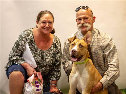 領養流浪狗Binx 因為「太乖」退養/Arizona Animal Welfare League & SPCA 臉書