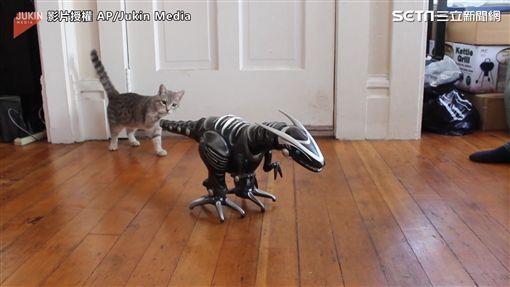 喵星人看見機器恐龍,不敢輕舉妄動。