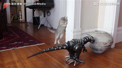 機器恐龍不停撞到東西,喵星人在一旁觀看。