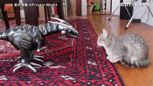 喵星人與機器恐龍對峙。