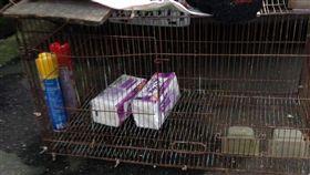 寵物,衛生紙,繁殖,Dcard 圖/翻攝自Dcard