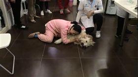 (圖/翻攝自Leewen Zhang臉書)中國,狗,毒死,動物,黃金獵犬