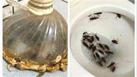 網友自製「補蟑神器」,成功防止蟑螂入侵家中。(圖/翻攝自臉書社團「爆廢公社」)