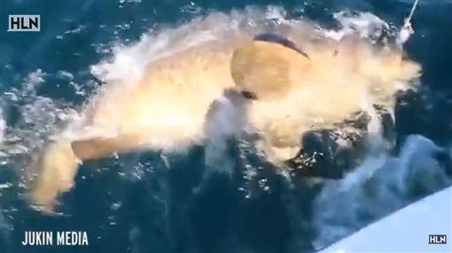美國,釣魚,釣客,巨魚(圖/翻攝自Headline News Youtube)