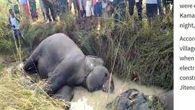路遇橫禍!印度7頭大象外出覓食…觸高壓電慘死