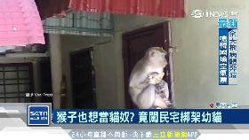 野猴綁架貓1700