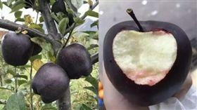 「黑蘋果」一顆要價6百 果農卻不願種(圖/翻攝自微博)