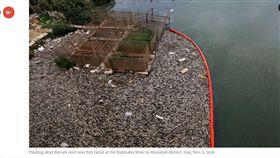 養殖鯉魚集體暴斃 河岸上全是屍體(圖/翻攝自美國之音)