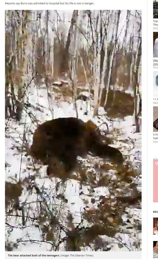 俄羅斯,少年遭熊攻擊、分屍(圖/翻攝自鏡報)