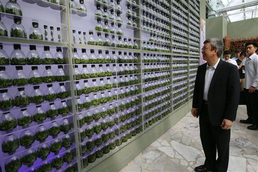 副總統陳建仁8日二度來到台中花博,造訪外埔園區樂農館及智農館。(圖/總統府提供)