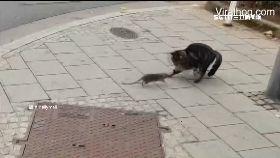 老鼠狠追貓1700
