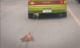 ▲開車拖行狗遺體網怒:比鞭屍還殘忍(圖/翻攝自泰國網臉書)