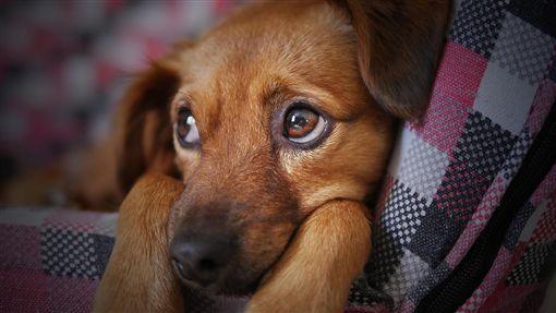 毛小孩,狗,/翻攝自Pixabay
