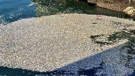 石門漁港,翻肚,魚群,暴斃
